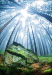 Forest Moss Grass Wall Art Print