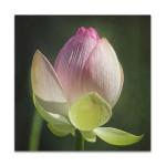 Lotus Bud Wall Art Print