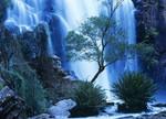 Australia Forest Waterfall Wall Art Print