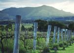 Kooroomba Queensland Vineyard Wall Print