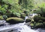 Rainforest Queensland Australia Wall Print