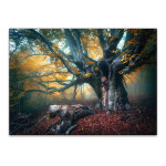 Old Fairy Tree Wall Art Print