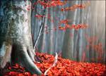 Autumn Fallen Leaves Wall Print