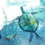 Delray Sea Turtle II Wall Art Print