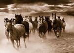 Running Horses Wall Art Print