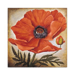 Poppy I Wall Art Print