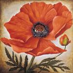 Poppy I Wall Art Print
