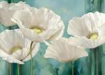 Tasmania Poppies Wall Art Print