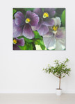 Violets on the wall