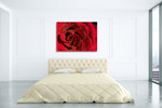 Red Rose Wall Art Print  on the wall