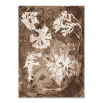 Natural Forms Sepia I Wall Print