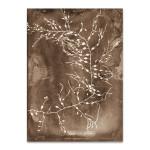 Natural Forms Sepia II Wall Print