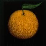 Orange Fruit Wall Art Print