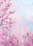 Japanese Cherry Flower Wall Art Print