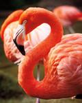 Flamingo III Wall Art Print