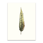 Painted Feather A Wall Art Print