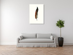 Painted Feather C Wall Art Print on the wall