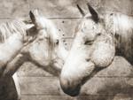 Love Horses Wall Art Print