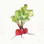 Veggie Market Radish II Wall Art Print