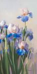 Iris French Cancan Wall Art Print