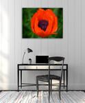 Orange Poppy Wall Art Print on the wall