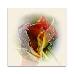 Rose Wall Art Print