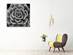 Succulent IV Wall Art Print on the wall