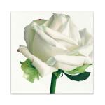 White Rose I Wall Art Print