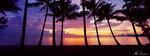 Sunrise Palm Cove Wall Art Print