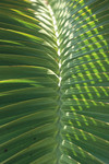 Palm Detail I Wall Art Print