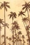 Palm Vista VI Wall Art Print