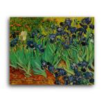 Vincent Van Gogh | Irises