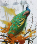 Colored Peacock