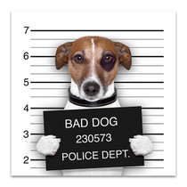 Mugshot Of Dog Art Print