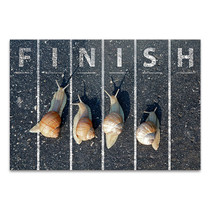 Snail At Finish Line Wall Art Print