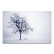 Red Bench In Fog Canvas Print