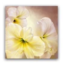 Annette Schmucker | White Amaryllis