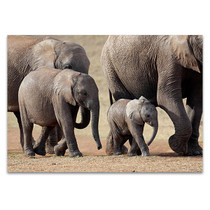 African Elephant Wall Art Print