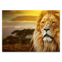 Savanna Lion Wall Art Print