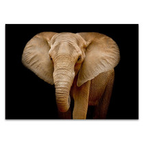 Wildlife Elephant Wall Art Print