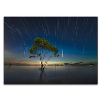 Shooting Stars Wall Art Print