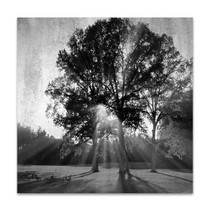 Black and White Trees Wall Art Print