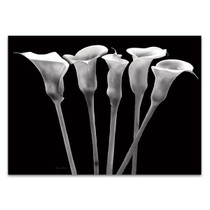 Lilies at Night Wall Art Print