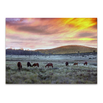Brumbies in Australia Wall Art Print