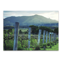 Kooroomba Queensland Vineyard Wall Print