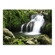 Lamington National Park Australia Wall Print