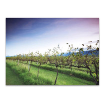 Queensland Lavender Farm Wall Art Print