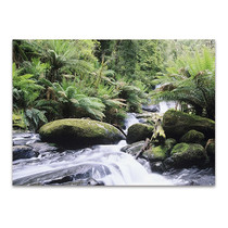 Rainforest Queensland Australia Wall Print