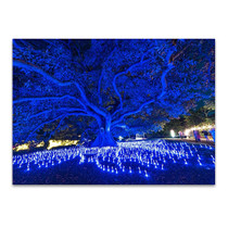 Sydney Light Festival Wall Art Print