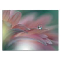 Water Drop on Petal Wall Art Print
